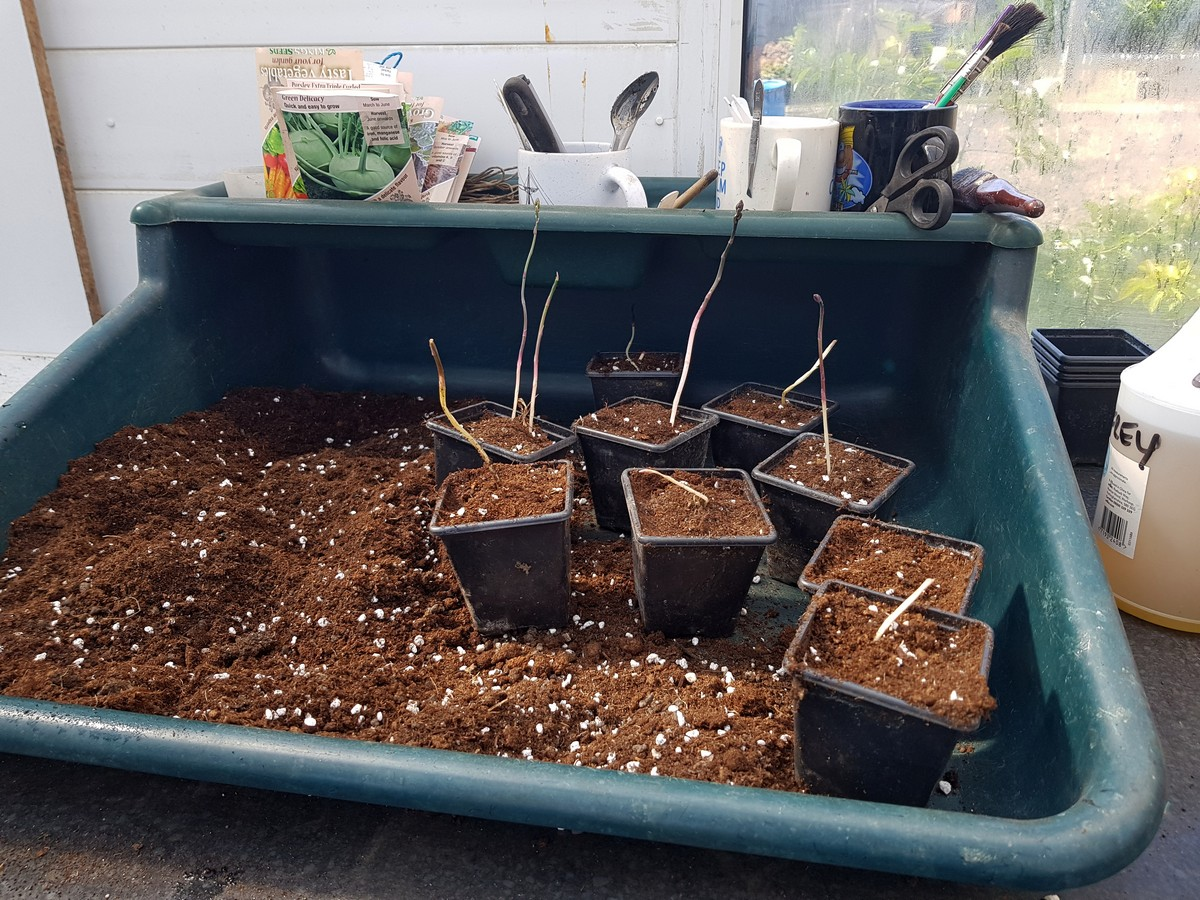 I use Humax compost for sowing sedlings and potting on